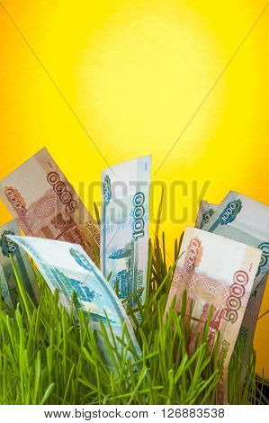 Ruble banknotes growing in green grass. Investment growth. Financial concept.