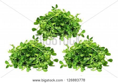 Snow Pea Sprouts on Isolated White Background