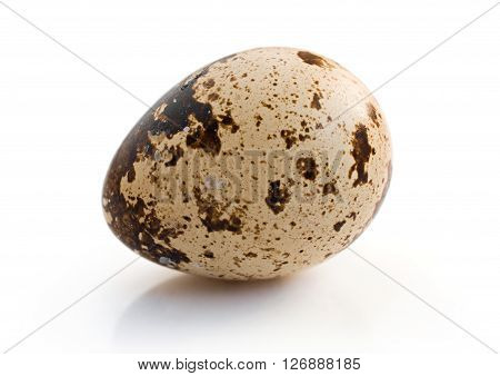 quail egg close-up isolated on a white