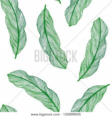 Vector graphic seamless pattern from green leaves houseplant hand-drawn in a linear style. Seamless texture of sketch bird feathers isolated on white background. For wrapping paper fabric textile.