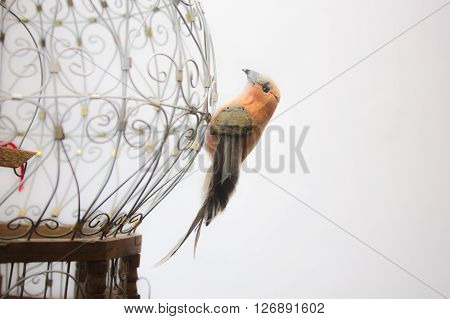 Bird perched on the outside of a vintage cage.
