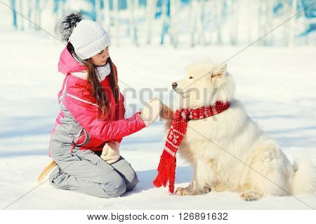 White Samoyed Dog Gives Paw Woman Owner In Winter Day