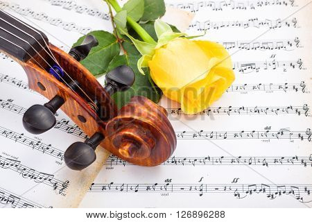 Close View Of Violin Scroll And Yellow Rose