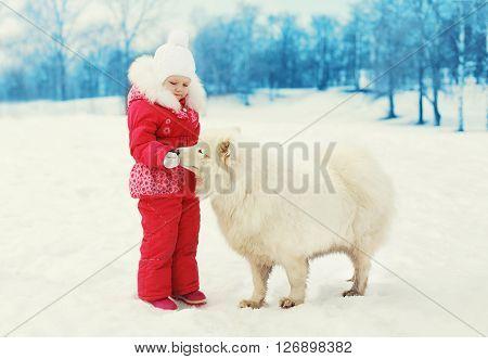 ?hild Feeding White Samoyed Dog In Winter Day