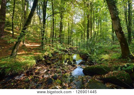 Small stream in a green deciduous forest