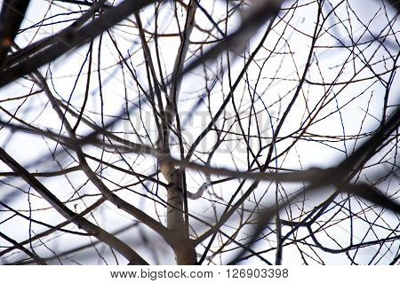 The tracery of offshoots of a young tree without leaves in winter