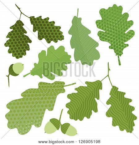 Isolated green leaf of oak without gradient, acorn