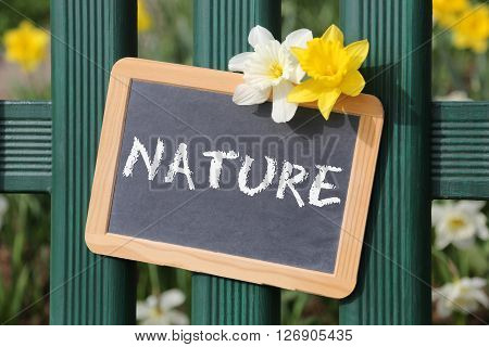 Nature Flowers Flower Daffodil Daffodils Spring Garden With Sign Board