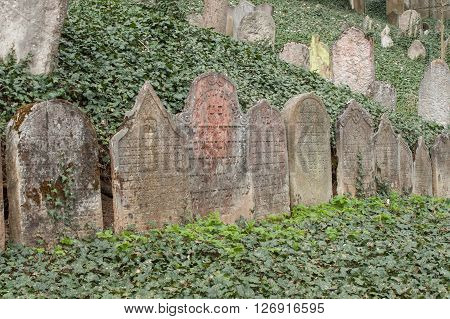 Trebic, Czech Republic, April 23, 2016: Old Jewish Cemetery, the old Jewish part of the city Trebic is listed among UNESCO. The Jewish cemetery is one of the oldest  in Central Europe