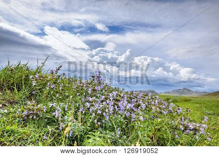 beautiful steppe herbs in early summer against the sky