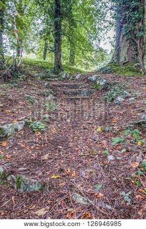 Italy, Udine, San Leonardo del Friuli - A rough pathway in the forest