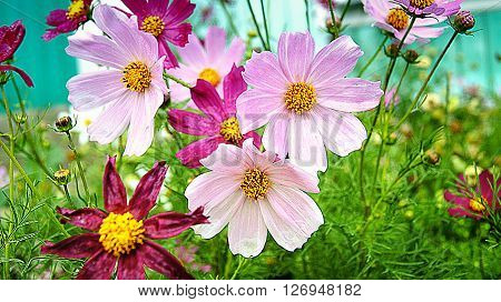 Wild flowers blooming in the green meadow.