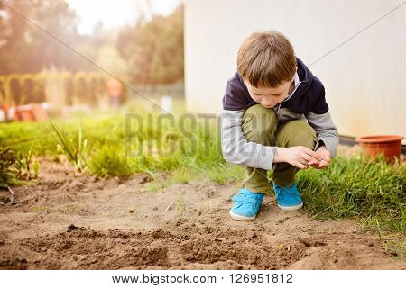 Child Sowing Vegetables In The Home Garden.