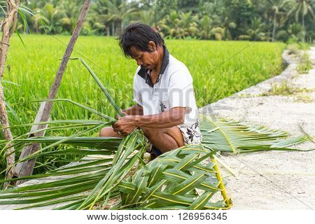 UBUD, INDONESIA - MAR 16, 2016: Unidentified villager sitting near the rice fields and weaving a basket out of palm leaves. Agriculture provides employment to more than 38% population in Indonesia.