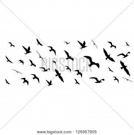 Flying Birds Silhouettes On White Background. Vector Illustration