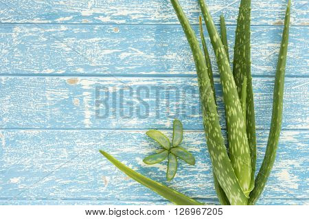 aloe vera on wooden table. top view