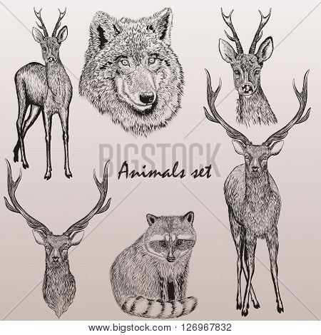 A collection of vector hand drawn animals in vintage style