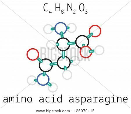 C4H8N2O3 asparagine 3d amino acid molecule isolated on white