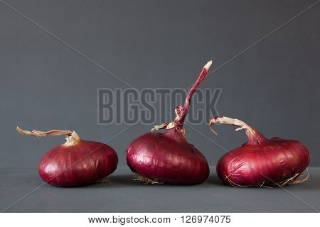 Red onions close up on dark background