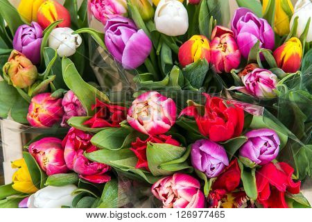 Colorful tulips for sale at a market