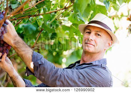 Man in vineyard