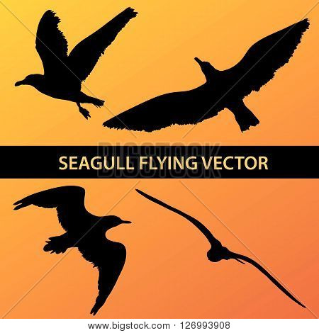 Set Of Silhouette Seagull Flying 4 In 1 On Sunset Background. Vector Illustration