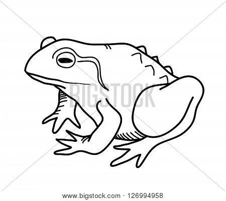 Frog Doodle, a hand drawn vector doodle illustration of a frog.