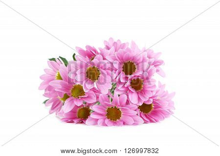 Pink Chrysanthemum Flowers Isolated On A White