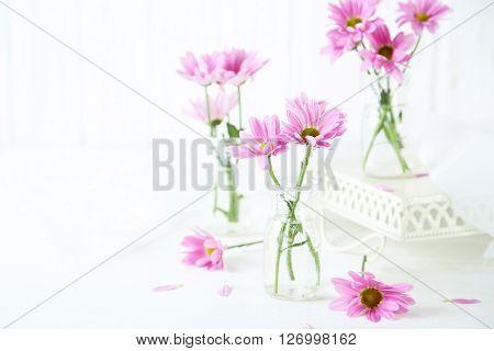 Pink Chrysanthemum Flowers On White Wooden Background