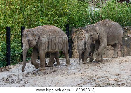 Photo of an elephant family in Dublin