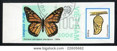 Danaus Plexippus Piexippus