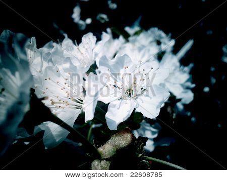 merry_flowering