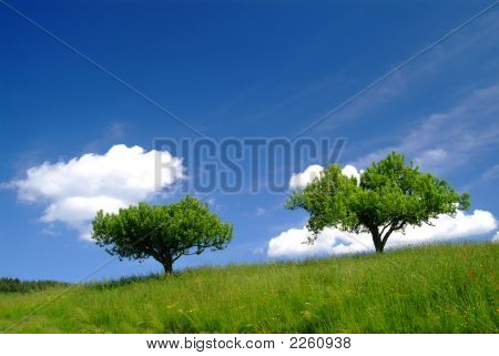 2 Trees And Sky