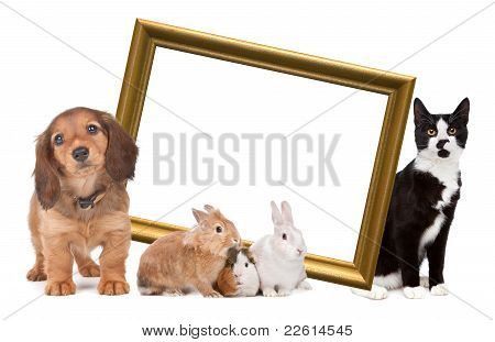 Group Of Pets Standing Around A Golden Picture Frame