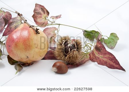 Autumnal Fruit Composition On  White