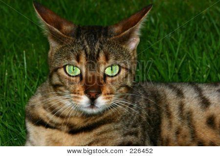 Powerful Eyes
