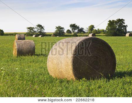 Hay Harvest on Farmland