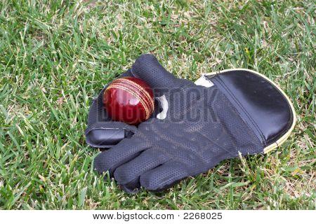 Wicket Keeping Gloves.
