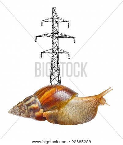 Snail With High-transmission