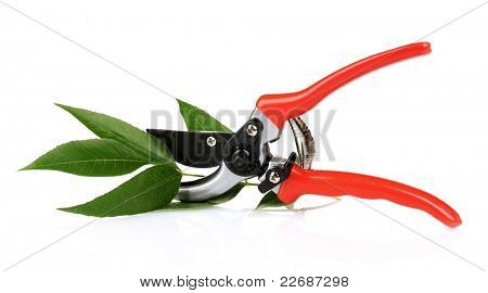 pruner with leaves isolated on white
