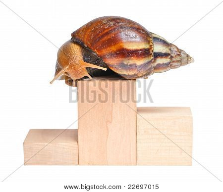 Snail On Podium