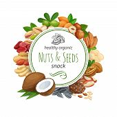 Banner Template With Nuts And Seeds. Pistachio, Cashew, Coconut, Hazelnut And Macadamia. Cola Nut, P poster