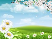 Spring Landscape With A Flowering Branch Of A Tree With Grass And Daisies In The Foreground. poster