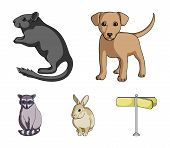 Puppy, Rodent, Rabbit And Other Animal Species.animals Set Collection Icons In Cartoon Style Vector  poster
