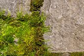 Soft And Fuzzy Springtime Green Moss Growing On A Rock Face In The Afternoon Sunshine. poster
