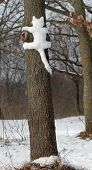Snow Cat On A Tree In  Park In  Kiev Cute Cat On The Tree.   Cat Outdoors. Wild Cats In Nature. Silh poster