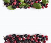 Black And Red Berries Isolated On White. Ripe Blackberries, Raspberries  And Basil Leaves On White B poster