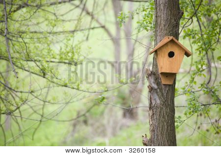 Birdhouse In A Forest