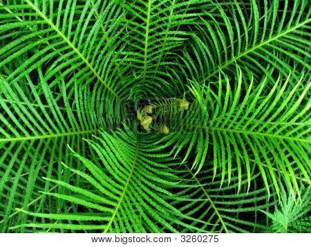 Fern Leaf Spirals