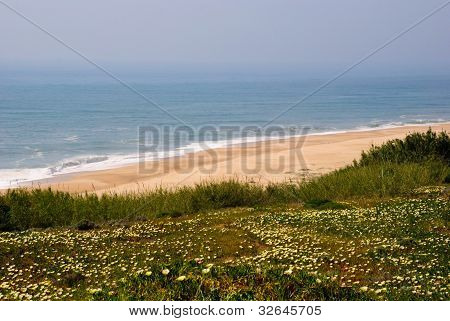 Ocean with flowers blossoming, Nazare